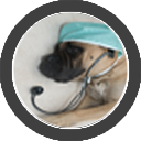 george-website-therapy-dog-button